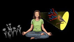 Practicing Synesthesia Meditation helps you to become aware of the synesthetic experiences around you.